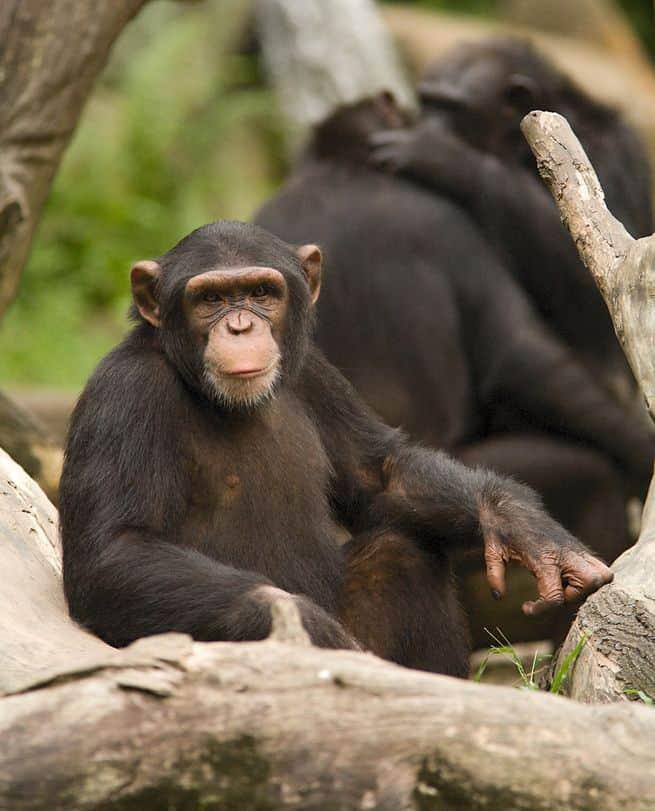 ما هي أذكى الحيوانات في العالم وكيف عرفنا مستوى ذكائها؟
