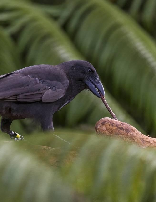 تجارب ذاتية: هكذا بدأت الطيور بتشكيل وعيٍ خاص بها