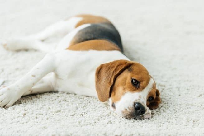 يمكن لوفاة حيوان أليف أن يكون مؤلماً أكثر من فقدان أحد الرفاق