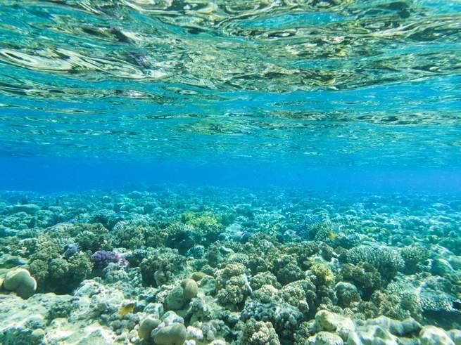 التنقيب البحري عن النفط في المستقبل قد يعيث فساداً في النظم البيئية لأعماق البحار