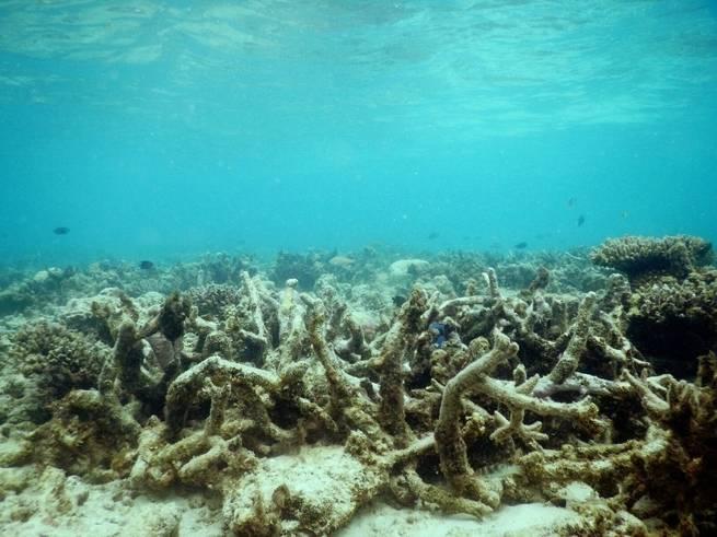 ما علاقة الشعاب المرجانية بالأسماك؟