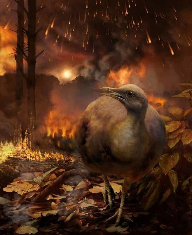 كيف نجت الطيور من كارثة الانقراض