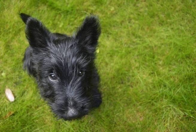 الكلاب الأصيلة تساعدنا على علاج السرطان
