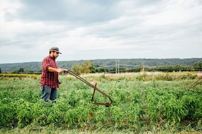 أصحاب المزارع الصغيرة يستخدمون المعدات القديمة مع التقنيات الجديدة
