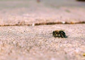 المبيدات الحشرية تجعل النحل أقل ذكاء