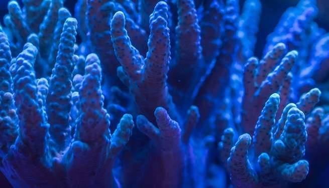 العلماء يجدون طريقة لترميم العظام البشرية بدراسة الحياد المرجانية