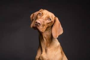 هل بإمكاننا حقاً أن نعرف ما إذا كانت حيواناتنا الأليفة سعيدة؟