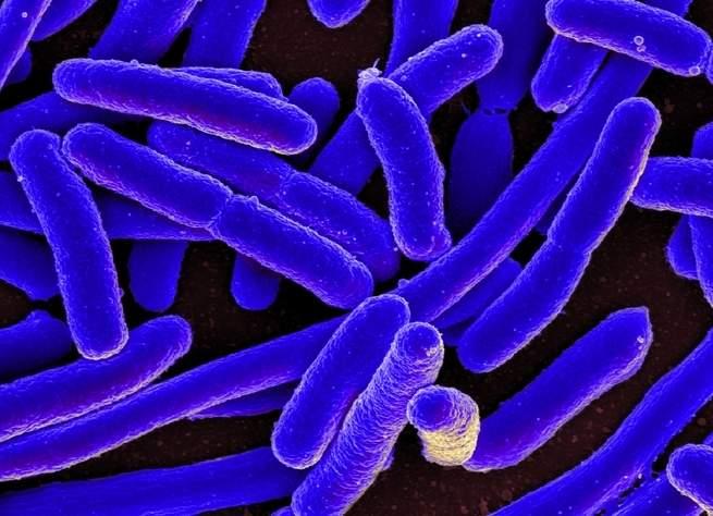 قد يؤدي ارتفاع حرارة الكوكب إلى زيادة مقاومة البكتيريا القاتلة للمضادات الحيوية.