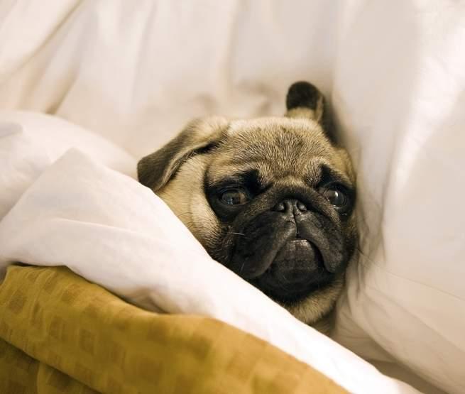 علماء النفس يحاولون معرفة سبب عدم ذهابنا للنوم (حتى عندما نريد ذلك)