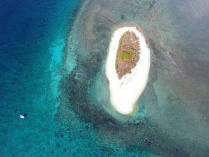 فقط 13% من محيطات العالم ما تزال فيها حياة برية
