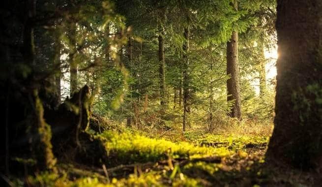 ارتفاع الحرارة يدفع التربة إلى زيادة ثنائي أكسيد الكربون