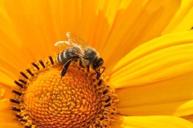 يتعامل النحل مع الظلام بشكل مشابه لتعامل البشر