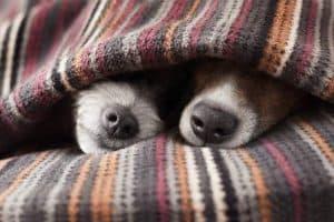 كيف تستيقظ في ظلمة الصباح في فصل الشتاء؟
