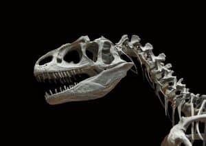 كيف ومتى انقرضت الديناصورات؟