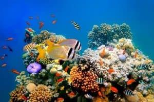 الشعاب المرجانية معرضة للانقراض، والحل في تجميدها