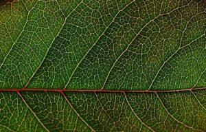 اكتشاف البروتين الذي يغلق مسام النبات ضد مسببات الأمراض