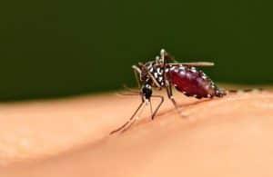 بحث جديد قد يساعدنا على فهم مرض الملاريا