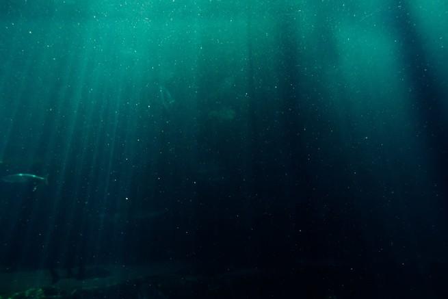 بدأت قيعان المحيطات تتآكل بسبب ارتفاع حموضتها