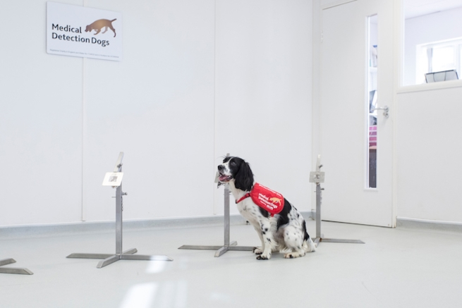 تم تدريب هذين الكلبين حتى تمكنا من تمييز المصابين بالملاريا عن غيرهم