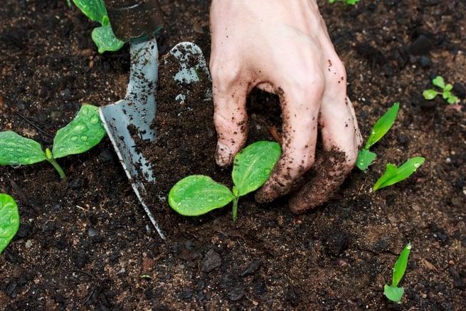 هل تخرج النباتات فضلاتها كما يفعل البشر؟