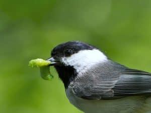 هذه هي النباتات التي تجذب الطيور المغردة إلى فناء حديقتك المنزلية