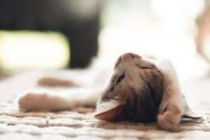 من الممكن الإفراط في النوم، ولكن لا تدع ذلك يجعلك تنام أقل من حاجتك