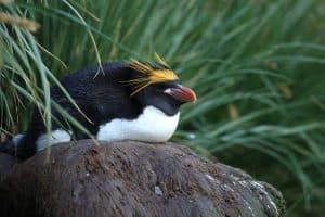 كيف أثَّرَت الجُزُر على تبايُن أنواع طيور البطريق؟