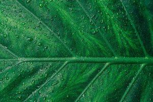 بإمكان الأشجار المزيفة مساعدة البشر على مكافحة تغير المناخ