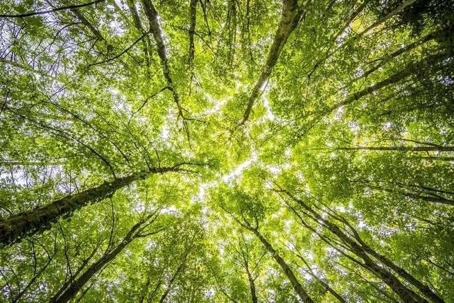 للأشجار الصغيرة قدرة على التكيّف ويمكنها إنقاذ غابات الأمازون