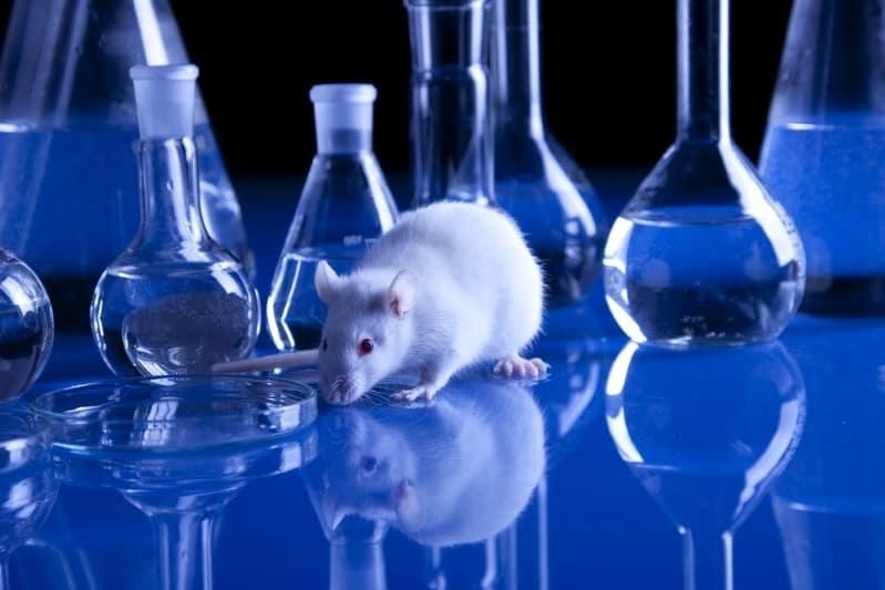 هل نحتاج إلى قوانين لعمليات التعديل الجيني للحيوانات؟