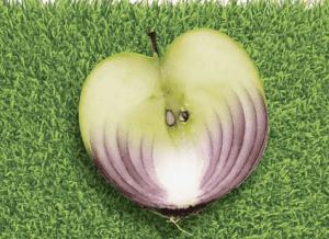 الحواس قد تجعل البصل والتفاح لا يختلفان عن بعضهما كثيراً
