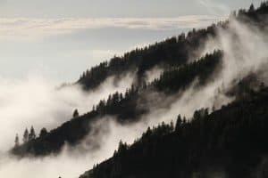 استخدام أشعة ليزر من الفضاء لدراسة الأشجار على الأرض