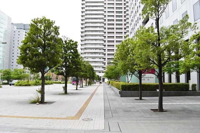 كم شجرة نحتاج إليها لتبريد شارع في المدينة؟