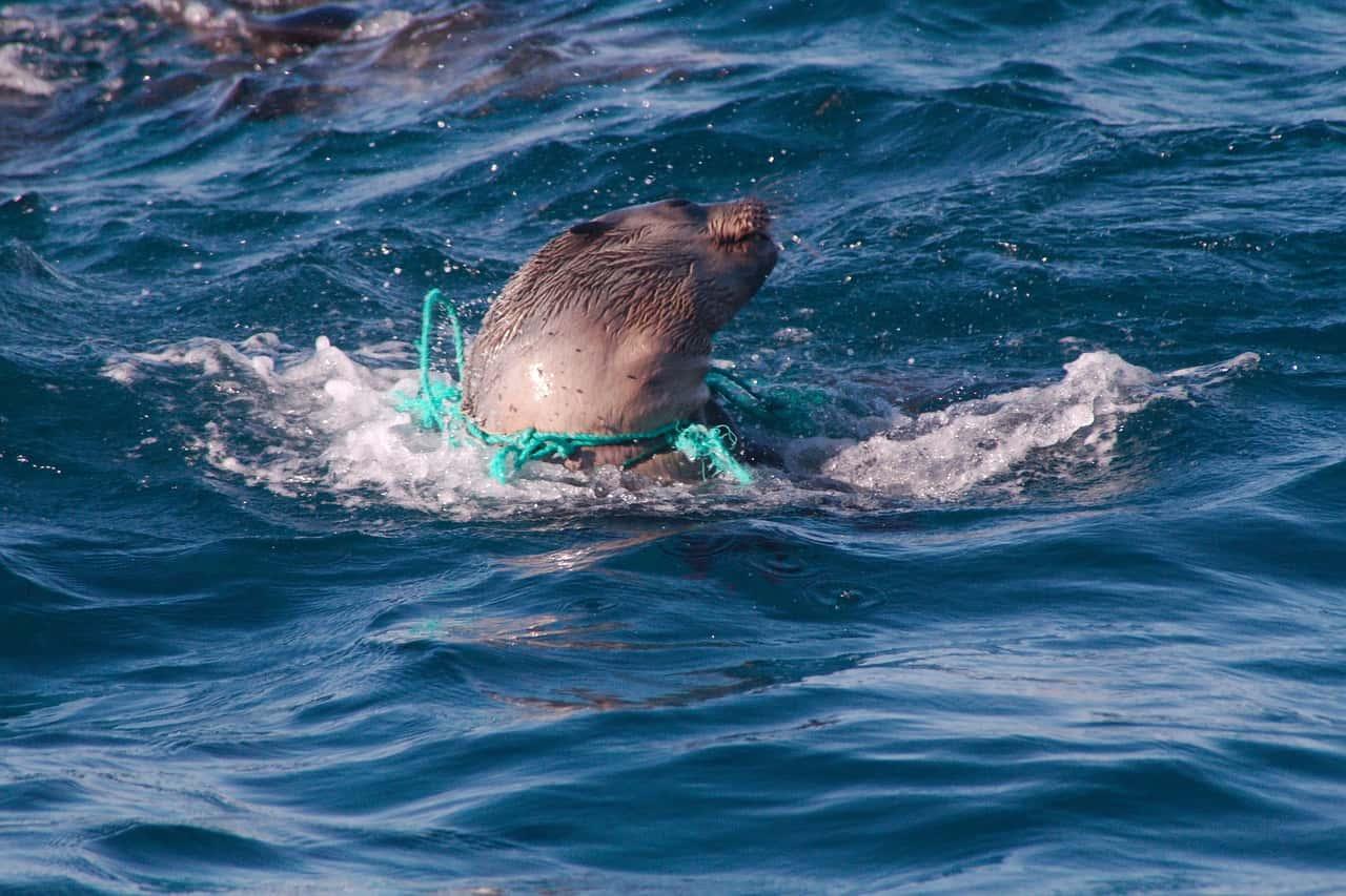 يوم الأرض: تعرف على خطر النفايات البلاستيكية والنفطية على البيئة البحرية