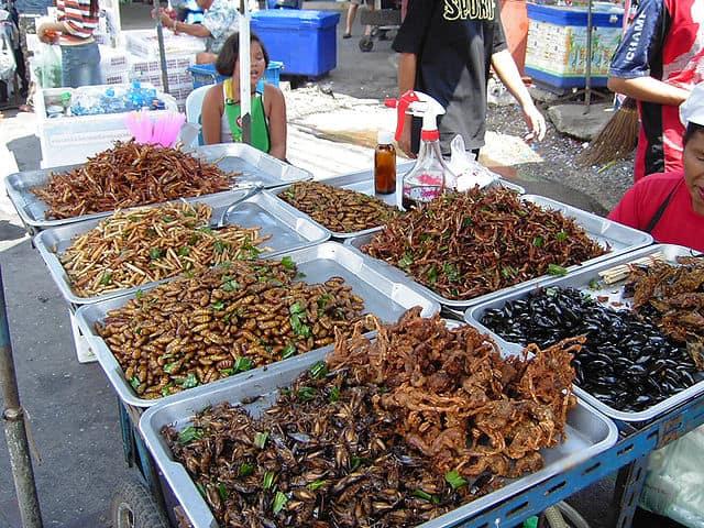 مستقبل الغذاء, حشرات, نمل, تغذية, تربية الحشرات