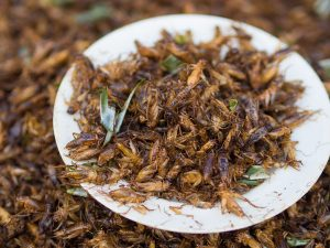 الحشرات المقرمشة: غذاء المستقبل من أجل إنقاذ كوكبنا