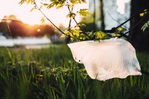 هل تتحلل الأكياس البلاستيكية القابلة للتحلل؟
