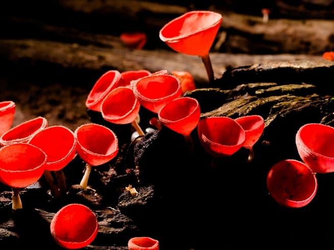 الفطريات القديمة قد تكون سبباً في ظهور أشكال الحياة المعقدة