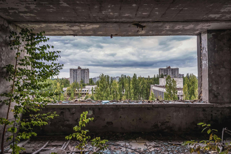 لماذا نجت النباتات من كارثة تشيرنوبل؟