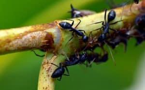 6 حقائق مدهشة عن النمل