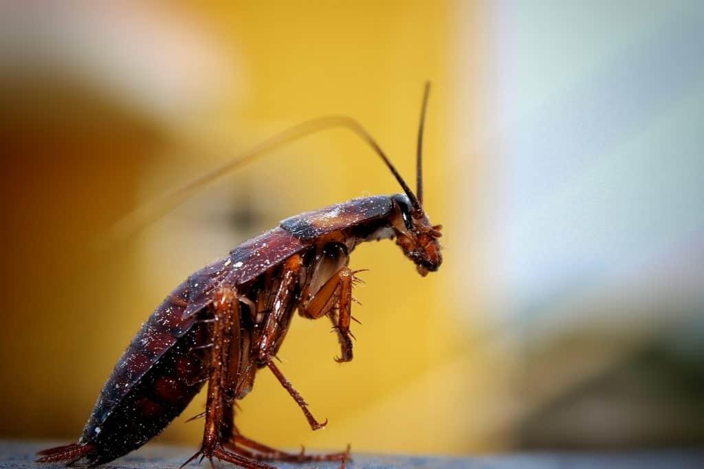 8 حقائق عن الصراصير قد تثير دهشتك