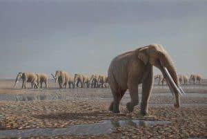المفترسة حية ترزق: الحيوانات العاشبة الأكثر عرضة لخطر الانقراض