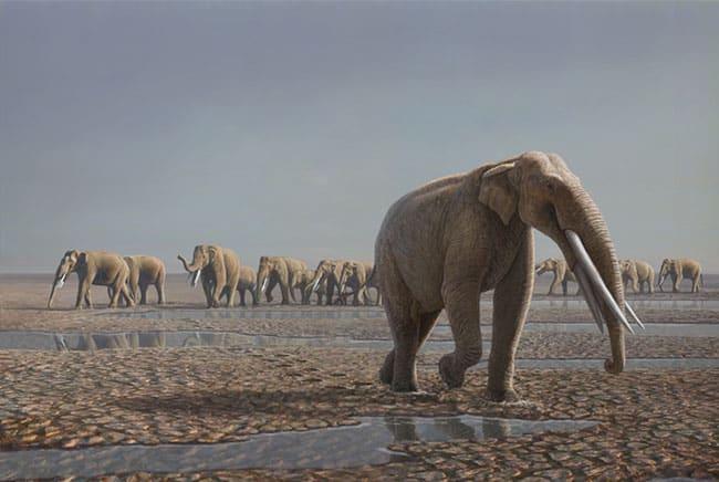 الفيل الإماراتي