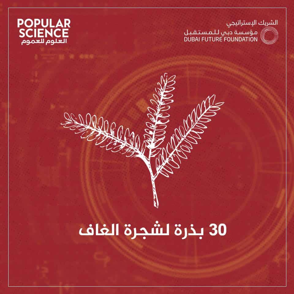 الإمارات, الفضاء, نبات الغاف