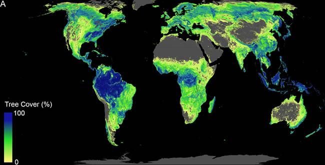 تشجير, غابات, التغير المناخي, أشجار