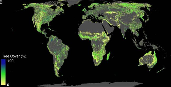 يمكن زراعة مليار هكتار من الغابات إذا استثنينا الصحارى والمناطق الحضرية