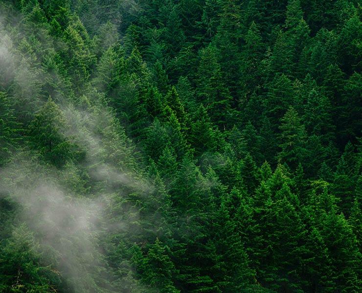 هل يمكن لإعادة التشجير أن تحد من التغير المناخي؟