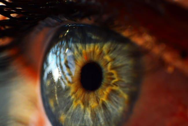 عين, النقطة العمياء, العمى, الرؤية, الإبصار
