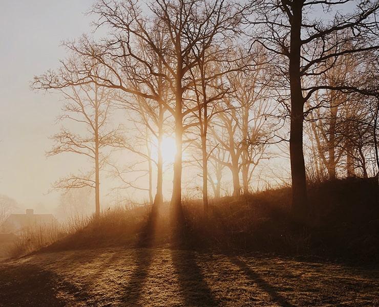 شرح المناخ: كيف نختار الأشجار المناسبة لامتصاص الكربون من الهواء؟