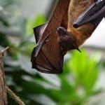 خفاش, أمراض, فيروسات, مقالات علمية